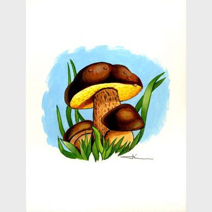 Champignons bolet