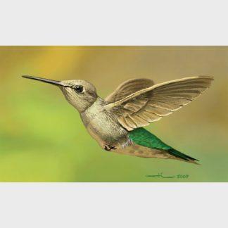 Le colibri, le minuscule oiseau, seul capable de faire du sur place
