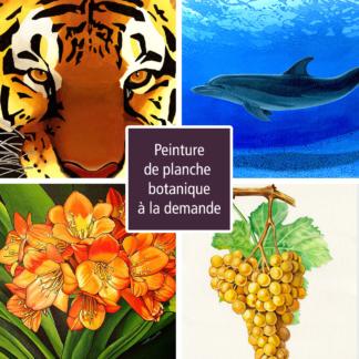Nature - animaux