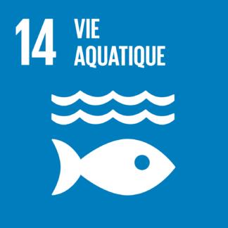 14 – Vie aquatique